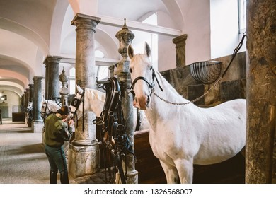 February 20, 2019.Royal Stable in Denmark Copenhagen in territory Christiansborg Slot. Man young woman rider jockey preparing for a bridle, bridle, occasion, bridel snaffle, bridle on a white horse.