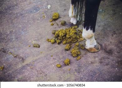 Feces of horses.