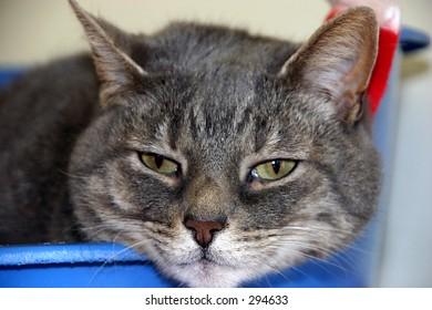 fed up cat