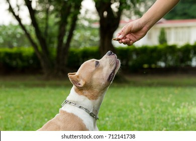 feed american bully dog at the lawn green