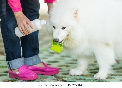 feed a dog