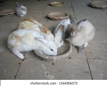 Feed rabbits with pellet food in the animal feeding area. Group of rabbits eating food from a tray with hunger at the rural farm, Phrae Thailand.