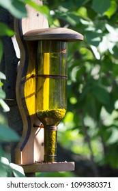 Feeder for birds, made from an empty glass flask. Use of household rubbish in decorative, and practical purposes in gardening