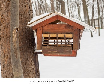 Feeder for squirrels in the park with the protection of birds in the winter.