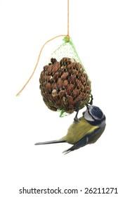 Feeding bird on white background (Blue tit bird)