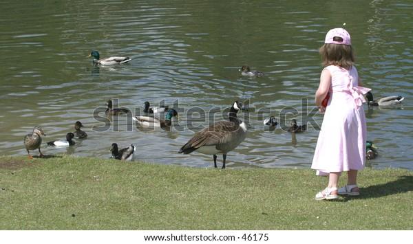 feeding birds at a park