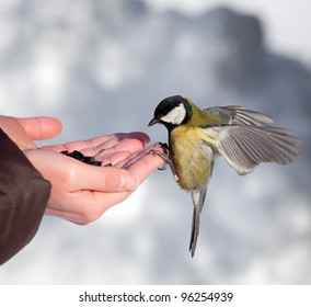 Feeding of birds in the winter