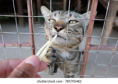 Feeding a cute cat