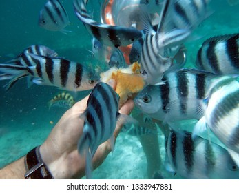 Feeding the fish on a diving resort in Grand Baie, Mauritius. Grand-Baie (or sometimes Grand Bay) is a coastal village in Mauritius located in Rivière du Rempart District