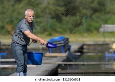 feeding fishes in a fish farm