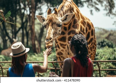 Feeding a giraffe in National park Nairobi, Kenya