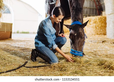 Feeding horse. Beautiful stylish horsewoman feeling extremely happy while feeding brown horse with some straw
