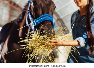 Feeding horse. Caring appealing horsewoman wearing jeans clothes feeling lovely while feeding her horse