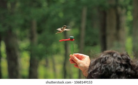 Feeding a hummingbird by hand.