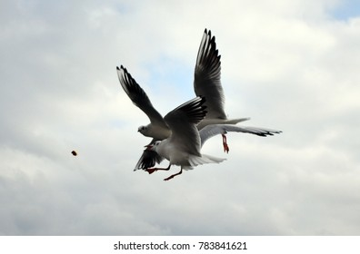 Feeding hungry seagulls with bread