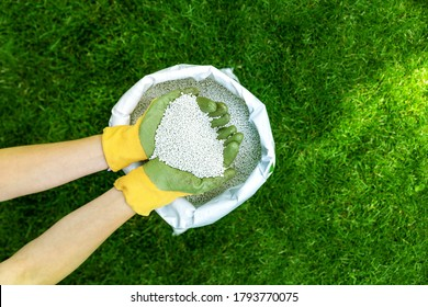 feeding lawn with granular fertilizer for perfect green grass