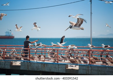 feeding the pelicans and sea lions in the UNESCO World Heritage port city of Valparaiso in Chile.