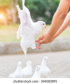 feeding pigeons on hands of a girl