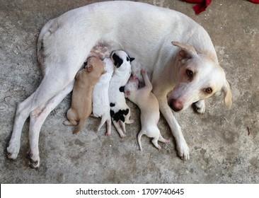 Feeding puppies - poor stray dog