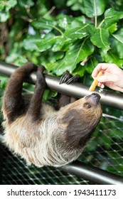 feeding the sloth in the Green Planet