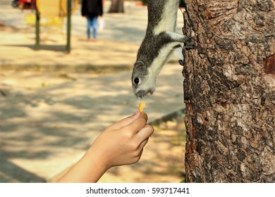 Feeding a squirrel in a park.