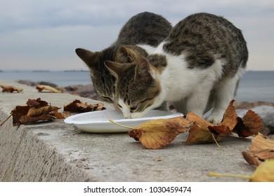 feeding street cat with milk.