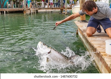 Feeding Tarpon at Famous tourist attraction in Islamorada, Florida Keys, USA summer travel tourism holiday.