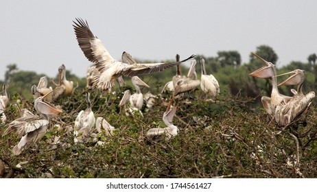 Feeding time for baby birds - South India.