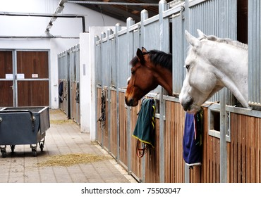 Feeding time for brown and white horse in a barn