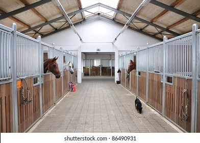 Feeding time for brown and white horse in stable