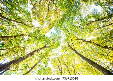 Feel nature, take a deep breath,relaxing, autumn forest tree branches at daylight.