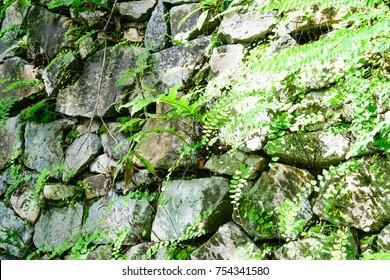 Feel on the stone niche.