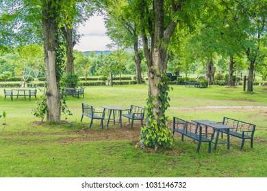 Feeling Shady / Chair in a garden park