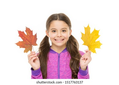 Feelings of comfort and nostalgia we experience in autumn are hard to express. Kid girl hold fallen maple leaves. Happy small child play with autumn leaves. Kid isolated on white show leaves.