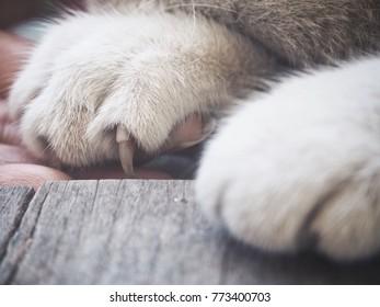 Feet of cat
