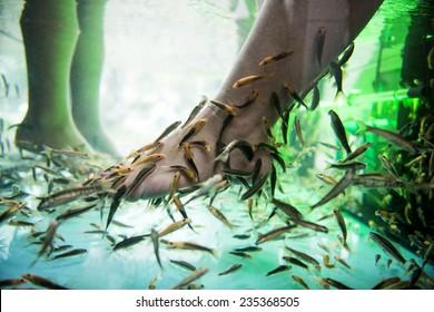 Feet in a fish tank receiving a spa treatment.