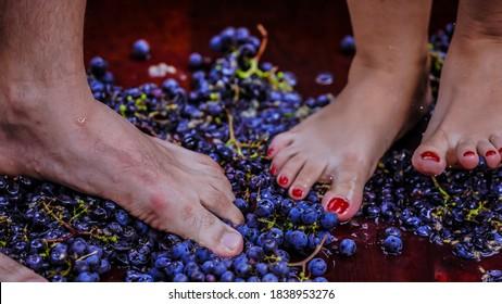 feet in the grape making wine
