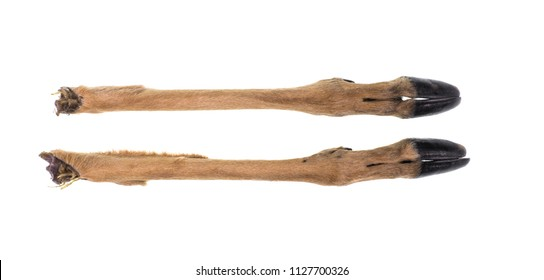 feet with hooves, antelope, deer isolated on white background