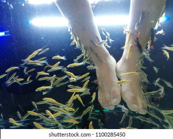 Feet Human in Garra rufa or Nibble Fish Tank for Fish Spa Therapy Treat Skin Allergy and Psoriasis