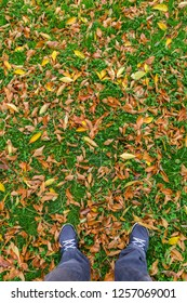 Feet of a man over the colorful fallen leaves on green grass