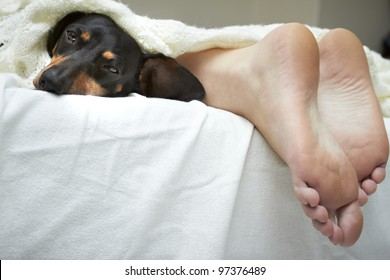 Feet and a sleeping Dachshund on white linen