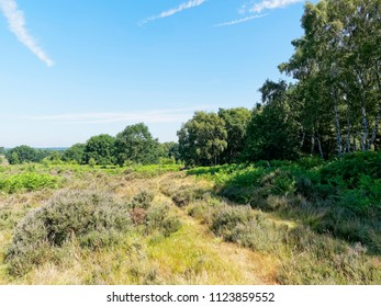 A feint track curves over lush grass, heather and fern moorland around a small wood. Budby South Forest on the fringes of Sherwood Forest in Nottinghamshire.