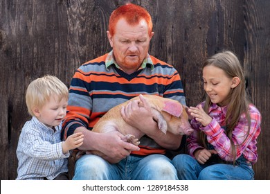 FElderly male farmer with red beard shows children pig. Farmer's kids are petting swine.