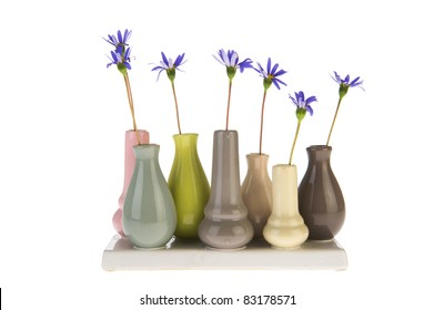 Felicia flowers in little vases isolated over white background