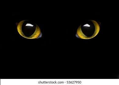 feline eye in the dark