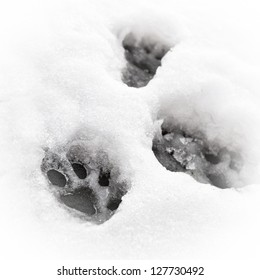 A feline paw print in the snow