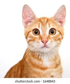 feline portrait