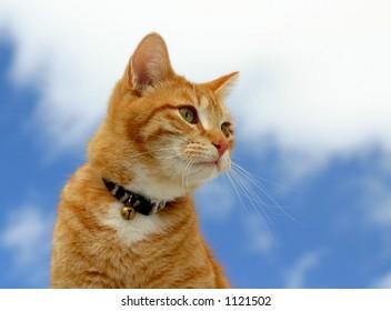 Feline Stalking