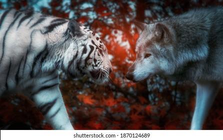 Feline versus canine face off photo manipulation