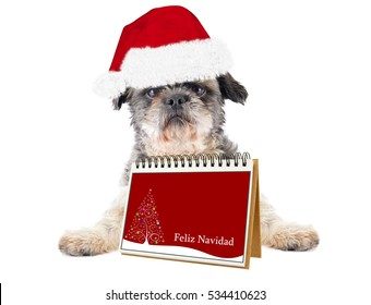 Feliz Navidad (Merry Christmas in Spanish) Shitsu Dog isolated on white background